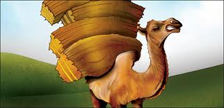 last straw on camel - feedback
