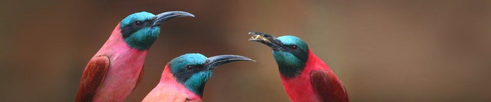 birds delegating by giving food