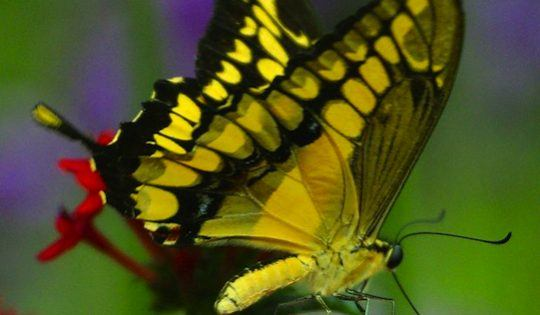 butterfly - handling nerves
