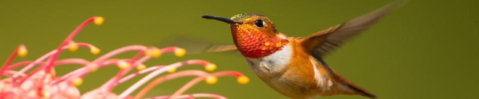 hummingbird balancing